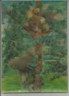 Koalas Accrochés à Un Eucalyptus. - Cartes Stéréoscopiques