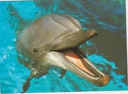 Dauphin Marin Mint   20x14 - Delfini