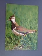 Vanneau Parc Ornithologique Du Marquenterre - Francia