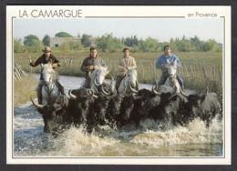 65981/ CAMARGUE, Gardians Et Taureaux - France