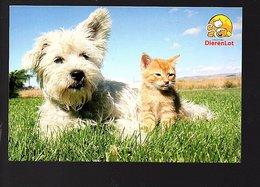 Doggy And Cat Dierenlot (78-15) - Katten