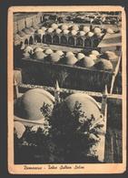 Damascus - Tekie Sultan Selim - Varnished Card - Ed. Studio Georges Derzi, Damascus - Par Avion - Syrie