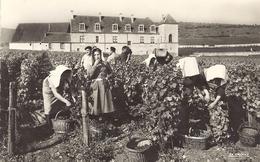 *CPM - 21 - VOUGEOT - Vendanges Au Château Du Clos Vougeot - Autres Communes
