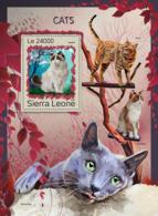 Sierra Leone 2016 Fauna Cats - Sierra Leone (1961-...)