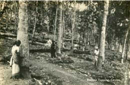 SRI-LANKA (Ceylon) - RPPC Rubber Tapping - VG Ethnic Etc - Sri Lanka (Ceylon)