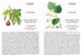 Lot Astrologie Gauloise - Postcards