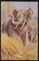OLIFANT  ELEPHANT - Éléphants