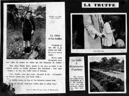 VAUCLUSE  - 3 Images Collées Sur Un Support Cartonné - LA TRUFFE à RICHERENCHES . - Vieux Papiers