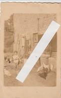 Warennes ,( Montbliart ,Sivry-Rance ,cachet Beaumont )PHOTOCARTE, ( Enfant Et Poule ,volaille ) VOIR VERSO - Sivry-Rance