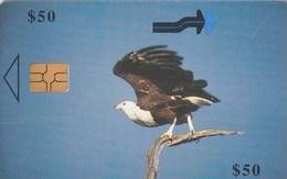 Zimbabwe - Fish Eagle - Zimbabwe