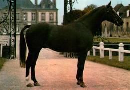 CPM - HARAS Du PIN - Elevage Du CHEVAL Français - Etalon De Selle - Chevaux