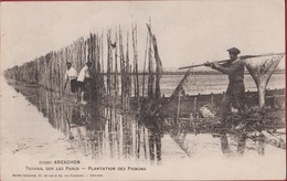 Arcachon - Travail Sur Les Parcs - Plantation Des Pignons - Ostréiculture Huîtres Oestercultuur Oesterkweek - Arcachon
