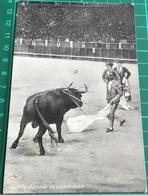 Bullfighting ~ Gallito Despues De Un Pinchazo ~ Matadors ~ Bull - Corrida