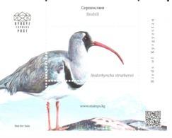 Kyrgyz Express Post 2018: Bec-d'ibis Tibétain/Ibisbill/Ibisschnabel - Cigognes & échassiers