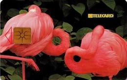 REPUBLICA CHECA. Flamingos - FLAMENCOS. C232A, 20/05.98. (070). - Other