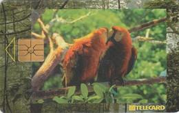 REPUBLICA CHECA. PARROTS - LOROS. C233A, 21/05.98. (178). - Parrots