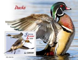 Sierra Leone 2019   Fauna  Ducks     S201904 - Sierra Leone (1961-...)