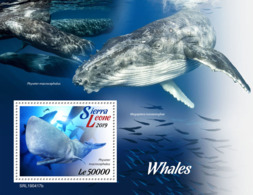 Sierra Leone 2019    Fauna Whales   S201904 - Sierra Leone (1961-...)