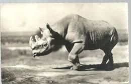 CARD 1979 - Rinoceronte
