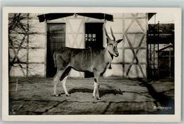 39150482 - Antilope Im Zoo AK - Animals
