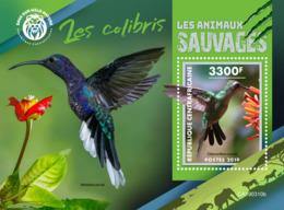 Central Africa 2019  Fauna   Colibri  Birds S201904 - Central African Republic