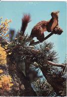 Squirrel, L'Ecureuil, Ardilla, Used - Animales