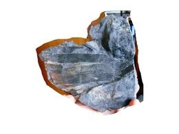 Fossiles Plante Du Carbonifère Carboniferous Plant Calamites Cisti. - Fossielen