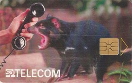 REPUBLICA CHECA. Tasmanian Devil. C160A, 52/08.96. (188). - Tarjetas Telefónicas