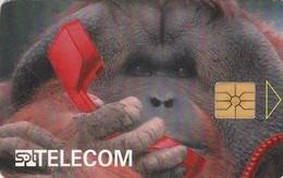 REPUBLICA CHECA. Orangutang I. C149A, 33/06.96. (191). - Phonecards