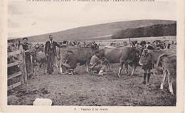 CHANALEILLES Domaine Du Sauvage Vaches A La Traite - Andere Gemeenten