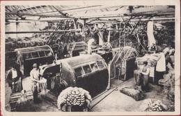 West-Vlaanderen - Vlas Lin Flax Flachs Zicht In Een Moderne Vlasvezelfabriek Vlasfabriek Fabriek - Histoire