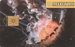 REPUBLICA CHECA. FAUNA MARINA, Jellyfish. C179A, 87/12.96. (213). - Phonecards