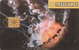 REPUBLICA CHECA. FAUNA MARINA, Jellyfish. C179A, 87/12.96. (213). - Tarjetas Telefónicas