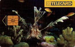 REPUBLICA CHECA. FAUNA MARINA, Sea Fish (Pterois Miles). C181A, 01/01.97. (019). - Fish