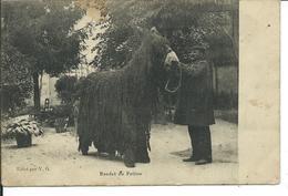 Baudet Du Poitou - France
