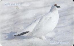 ANDORRA - Lagopus Mutus (Rock Ptarmigan) - BIRD - Andorra