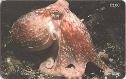ISLE OF MAN - Curled Octopus  - 20.000EX - Isola Di Man