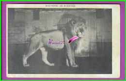 CPA (Spectacle Cirque) - SOUVENIR DE BOSTOCK - Animal Un Gros Lion - Circo
