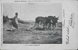 C.P.A. - Afrique > Erythrée > L'Aratro Abissino Animé Daté 1902 - TBE - Eritrea