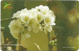Bhutan - BMobile - White Flower #3 - GSM Refill 300Nu, Used - Bhutan