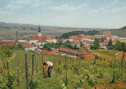 Lepoglava Croatia - General View W Prison Jail , Vineyard Vignoble 1972 - Gevangenis