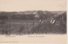 57 - RODEMACH - PANORAMA DU VIGNOBLE - NELS SERIE 103 N° 25 - France