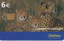 P-574 TARJETA DE ESPAÑA DE UNOS GUEPARDOS (GUEPARDO-CHEETA) - Phonecards