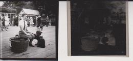 Bear Foto + Celluloid Negatives, Of Various Animals, Big Cats, Birds, Zoo, Bears, Monkeys Mono Aap - Fotos