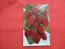 Logan Berries>   Ref  3473 - Flowers, Plants & Trees