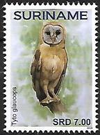 Suriname - MNH - 2019 - Ashy-faced Owl    Tyto Glaucops - Uilen
