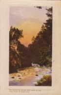 AO05 Trees Alongside A River - Trees