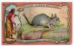 Chromo-- Chocolat  GUERIN-BOUTRON--mammifères---Le Chinchilla - Guerin Boutron