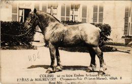 CPA Carte Photo CHAUMES-en-BRIE Colibri, Etalons Ardennais Aubere (861588) - Frankrijk