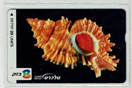 TELECARTE D ISRAEL COQUILLAGE 4 SHELL MUSCHEL T000004 - Fish